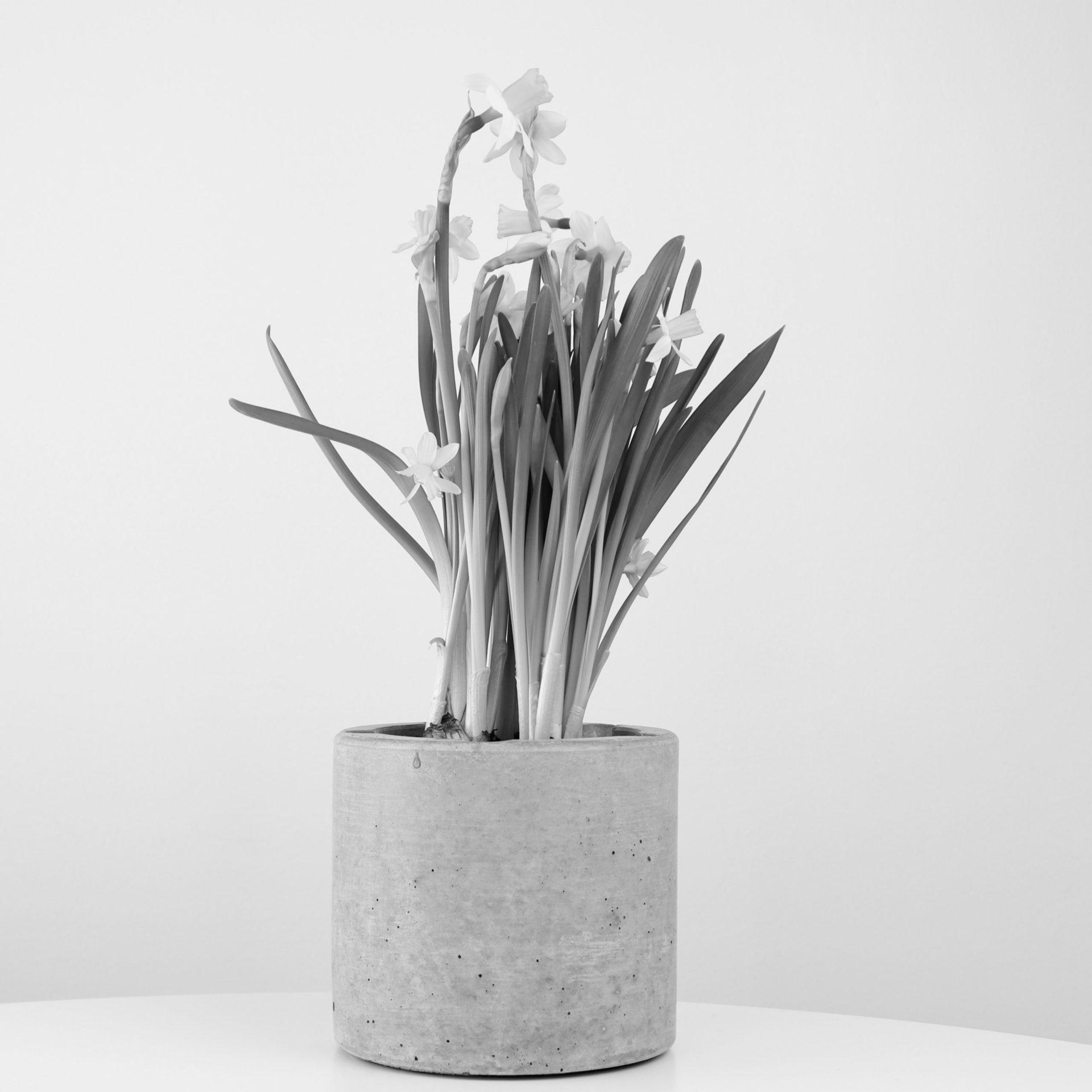 minimalismi