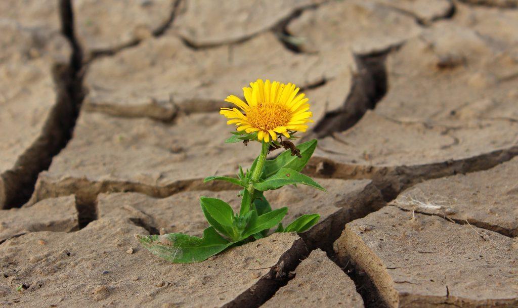 Kukka kuivalla maalla
